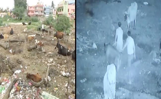 Cows Robbery In midnight Karnataka - Sakshi