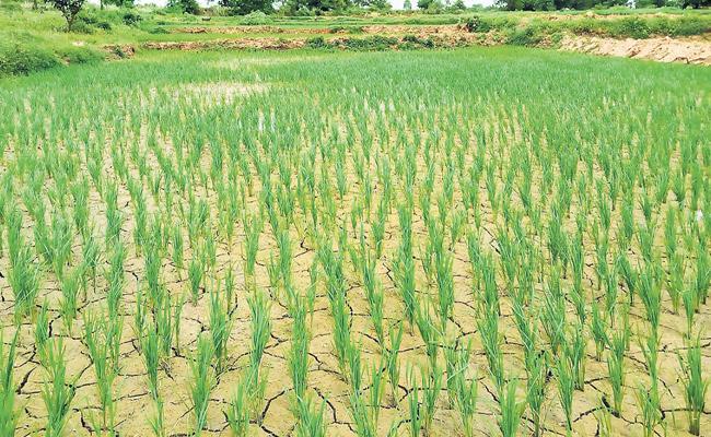 Less Rain Damage Crops In Telangana - Sakshi