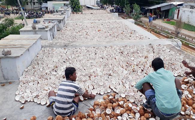 Coconuts Scam In Urukunda Swamy Temple Kurnool - Sakshi