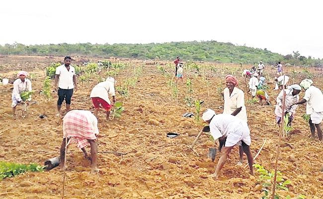 Haritha Haram In Forest - Sakshi