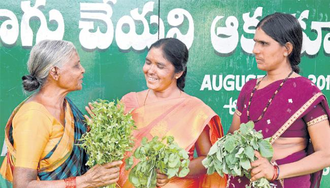 Alternate greens:duckling is equal to the egg - Sakshi