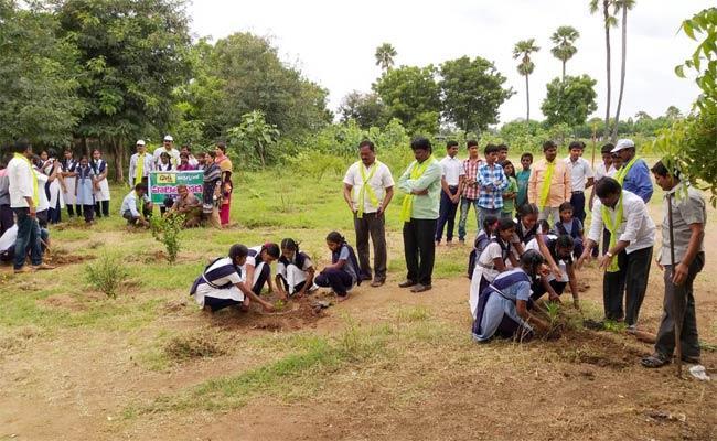 Haritha Haram In Warangal - Sakshi