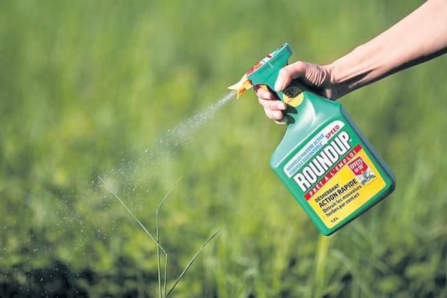 US courts to decide if weedkiller gave groundsman cancer - Sakshi