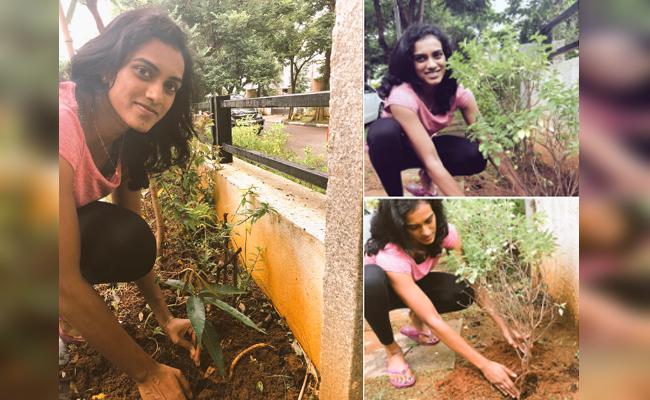 PV Sindhu Give A Challenge On Planting Saplings To Actress Samantha - Sakshi