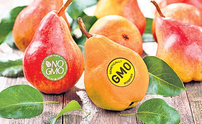 GMO Food In hyderabad Super Market - Sakshi