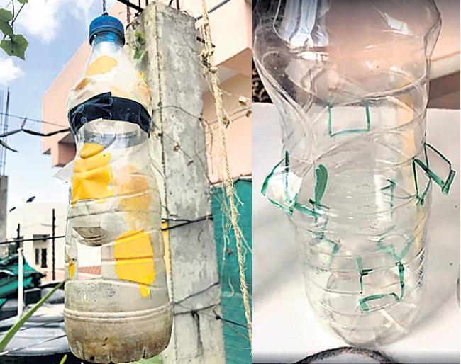 Fruit eagle flies with a plastic bottle - Sakshi