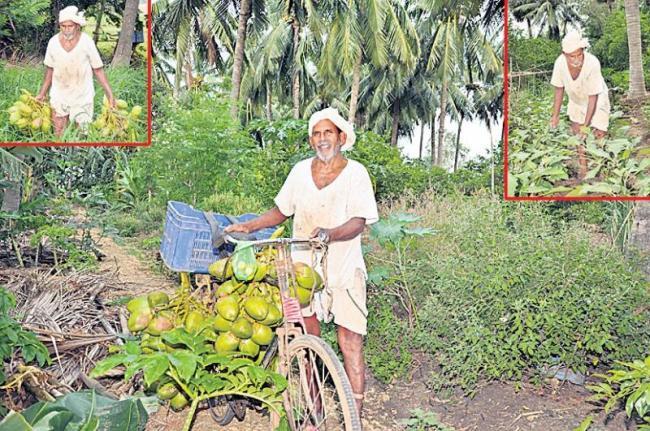 Betta former life is the crop! - Sakshi