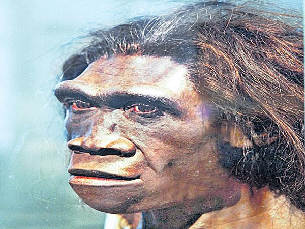 Homo erectus was the longest travellers  - Sakshi