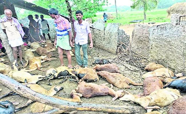 65 Sheeps Died By Dog Bite - Sakshi
