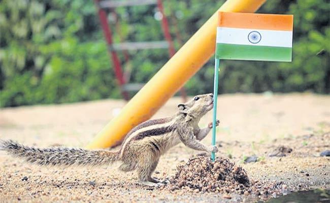 Squirrel Patriotism - Sakshi