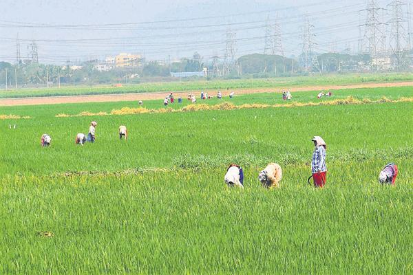 Organic University Set Up In Gujarat - Sakshi