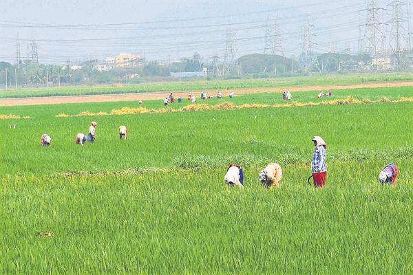 Organic University Set Up In Gujarat - Sakshi