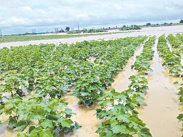 Crops loss in millions of acres At Joint Adilabad District - Sakshi