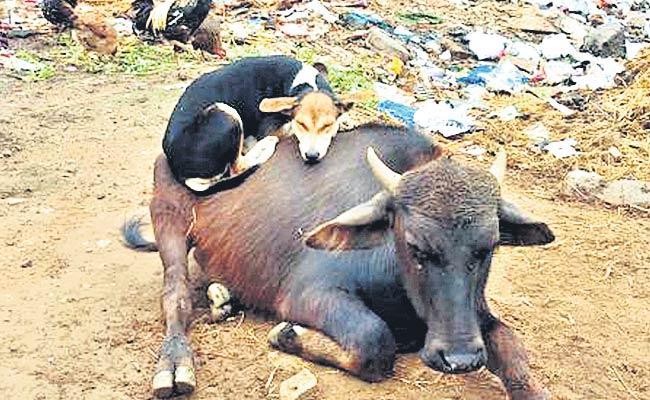 Dogs Halchal.. - Sakshi