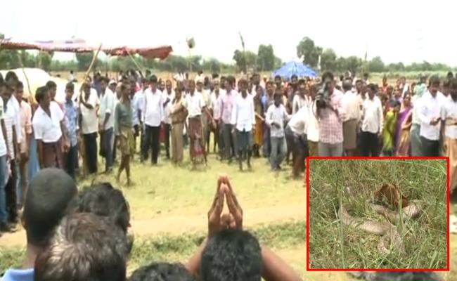 Snake Died In Durgada Village East Godavari - Sakshi
