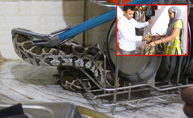5 Foot Python Found In Kitchen In Gurgaon - Sakshi