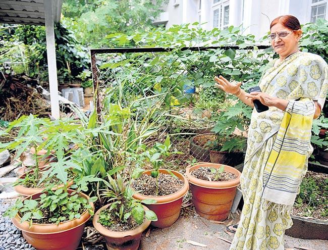 Create your Biodiversity Garden - Sakshi