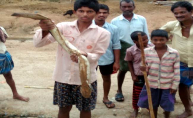 3 Feet Fish In Srikakulam - Sakshi