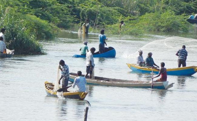 Fish Huntings Starts In Upputeru West Godavari - Sakshi