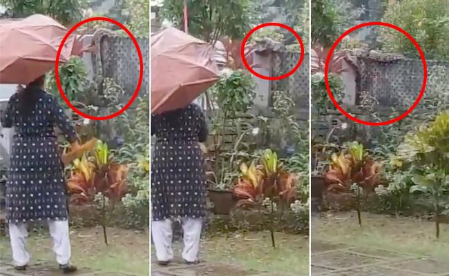 A Woman Protected Her family With a Broomstick From a Snake Invading her House - Sakshi