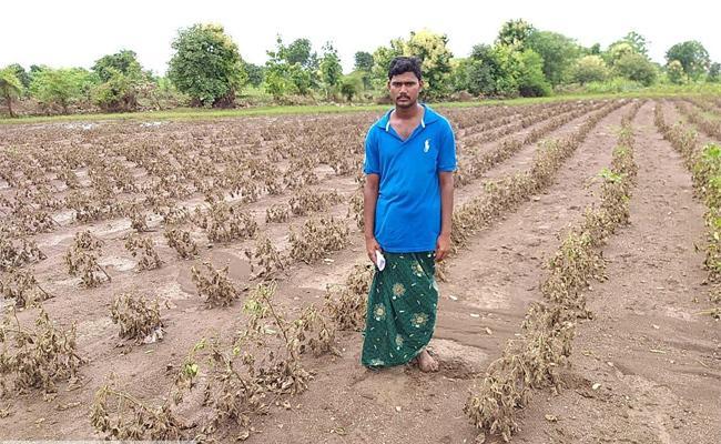 Crops Damage Department Of Agriculture Survey Adilabad - Sakshi