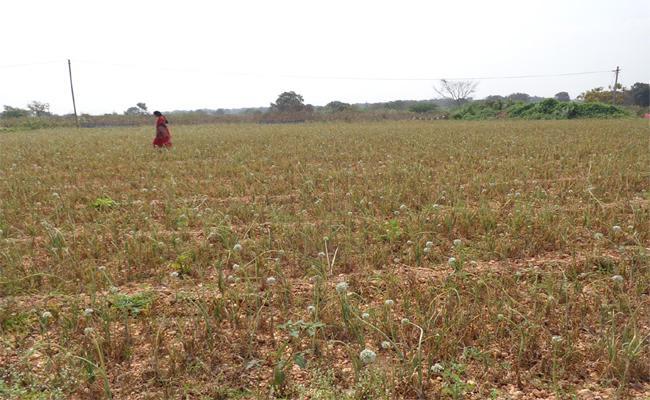 Onion Prices Decreases Farmers Problems In YSR Kadapa - Sakshi