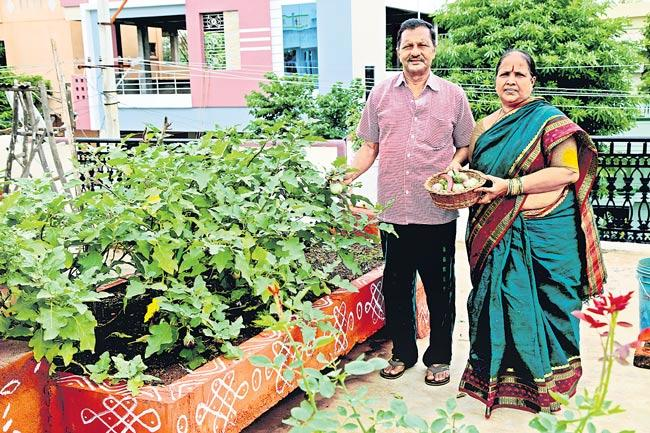 Organic greens and vegetables are at home crops - Sakshi