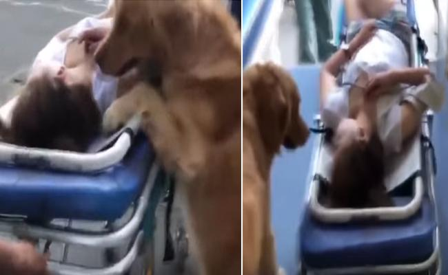 Dog Refuses To Leave Its Owner When She Unconscious - Sakshi