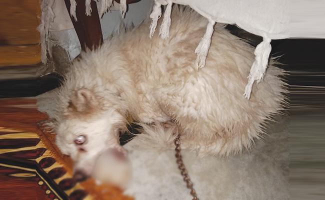 house Owner Beats Pet Dog In Visakhapatnam - Sakshi