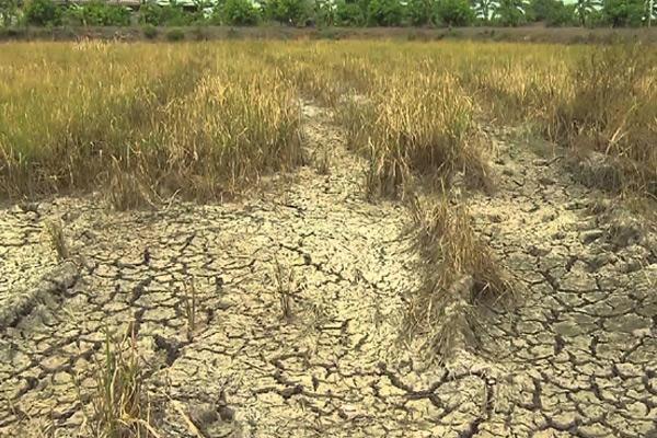 Rainfall deficit in this kharif season - Sakshi