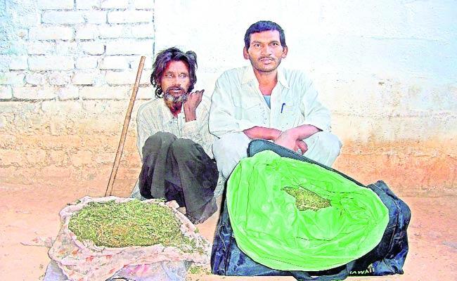 Marijuana smugglers caught in police  - Sakshi