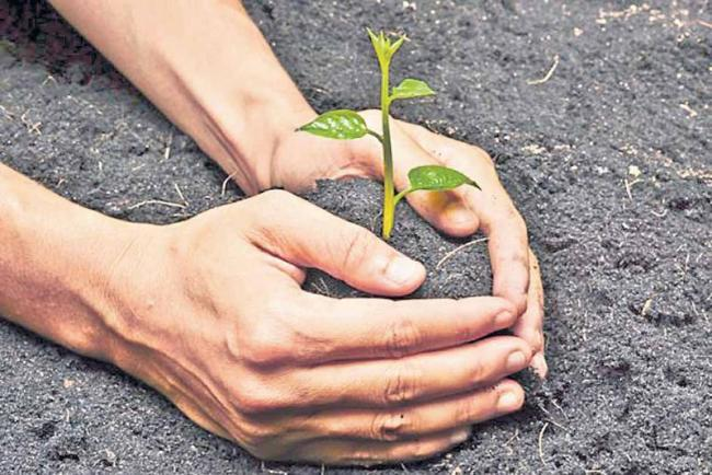 Human survival In   plant - Sakshi
