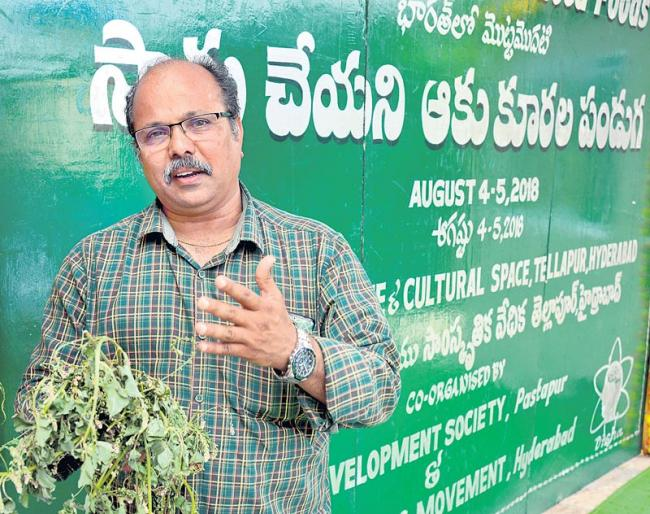 Weed plants are a mixed crops - Sakshi