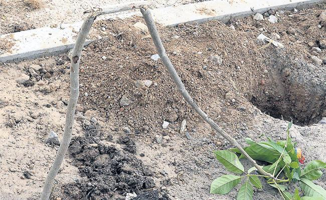 Telangana Haritha Haram 1Lakh Plant Removed and Land Occupied - Sakshi