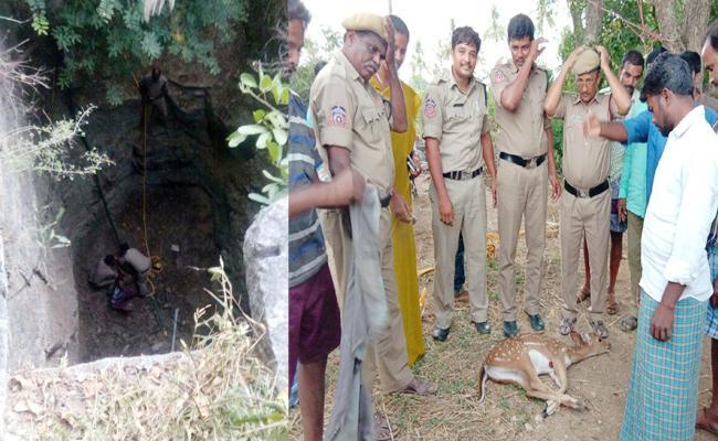 Fire Department Save Deer In Palamaner Chittoor - Sakshi