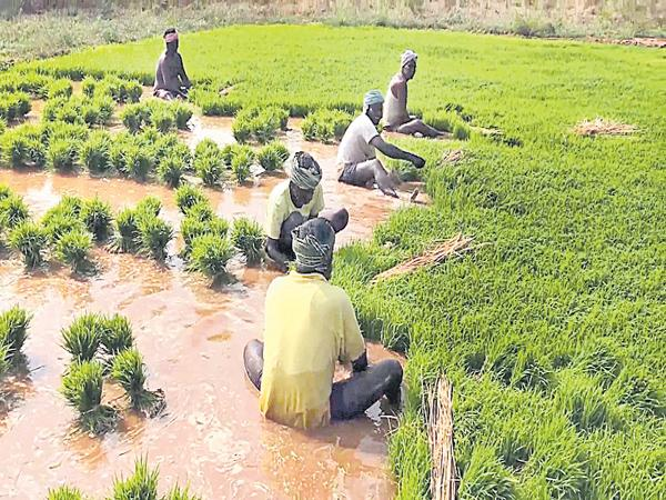 Paddy farmers was not supported by banks - Sakshi