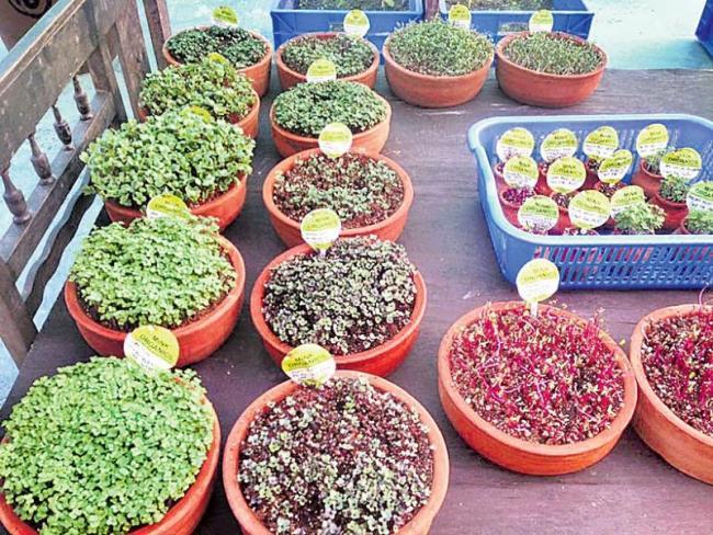 Social change through organic house crops - Sakshi