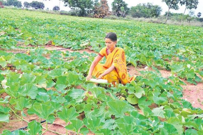 Health and income with Nature farming - Sakshi