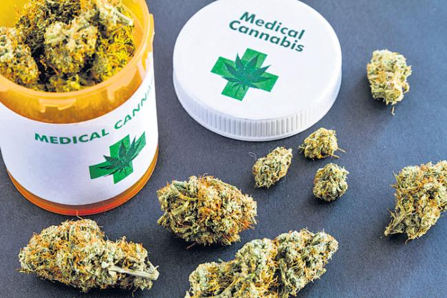 marijuana may be checked for a variety of health issues - Sakshi