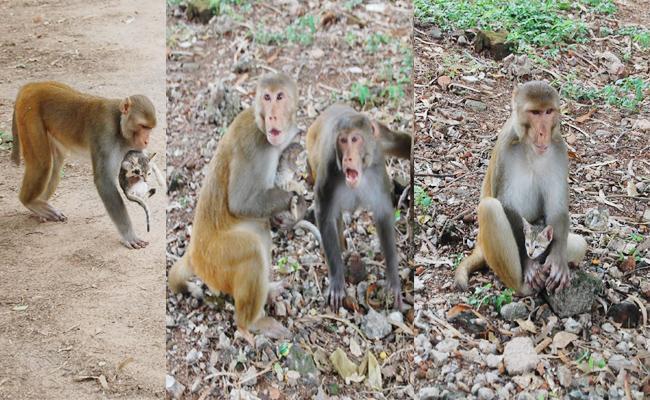 Monkey And Cat Friendship In East Godavari - Sakshi