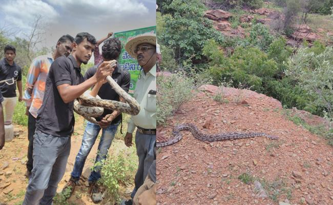 25 Snake Breads In Nallamala Forest Prakasam - Sakshi