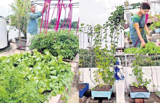 Cultivation of home crops of Green leafy vegetables - Sakshi