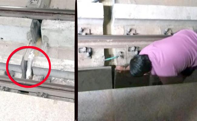 Metro Rail Stopped For 10 Minutes Due To Cat On The Track - Sakshi
