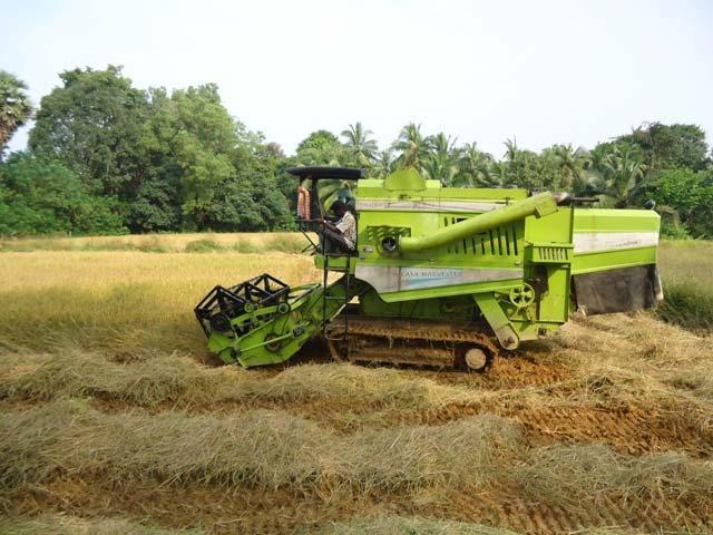 Rice Cutting Season In Medak District - Sakshi