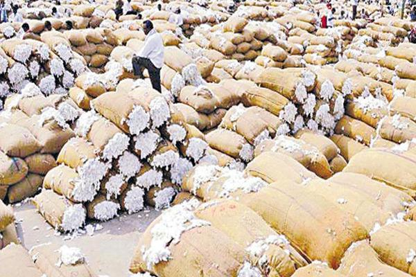 Farmers worry on Cotton yield - Sakshi