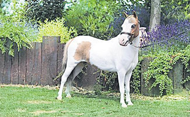 Indian Origin Visually Impaired Salim Patel To Get Guide Horse In UK - Sakshi