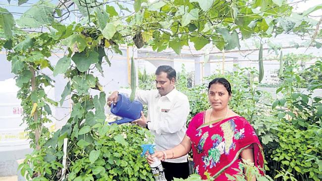 Vegetables and celery cultivation with home harvesting - Sakshi
