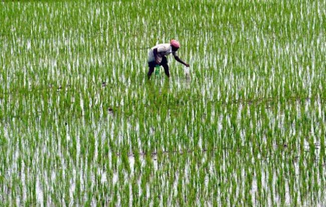 Training on Rice and Rice cultivation in Kornepadu - Sakshi
