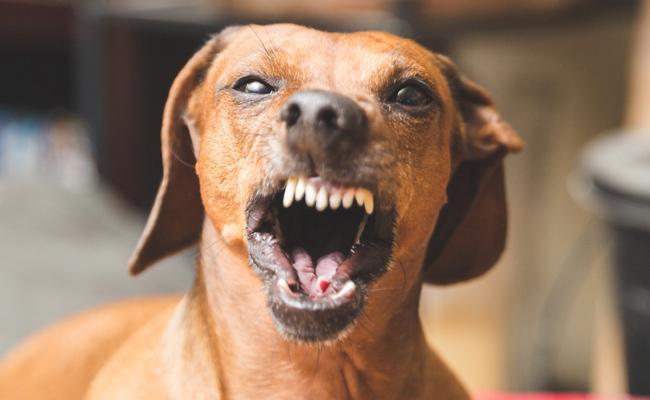 Dogs terror in Andhrapradesh - Sakshi