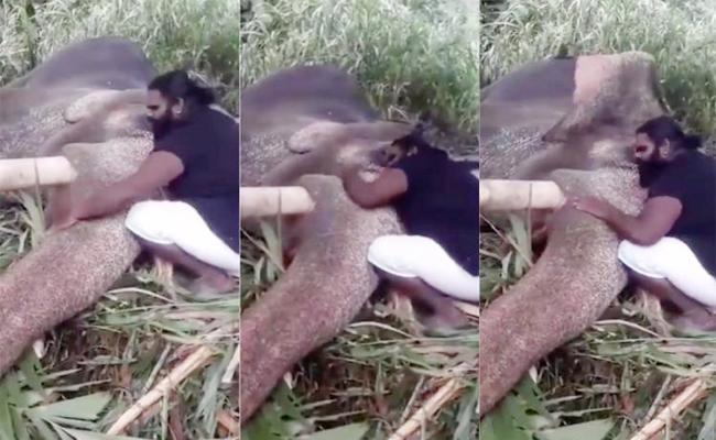 Elephant sleep With Ilayaraja Music in Tamil Nadu - Sakshi